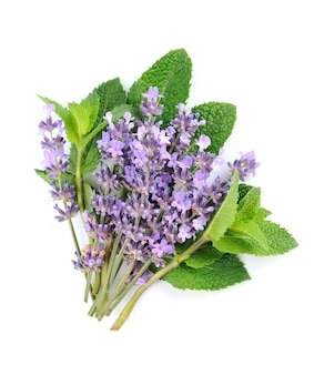Fresh herbal. mint and lavender in close up