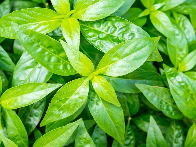 Свежее травяное растение