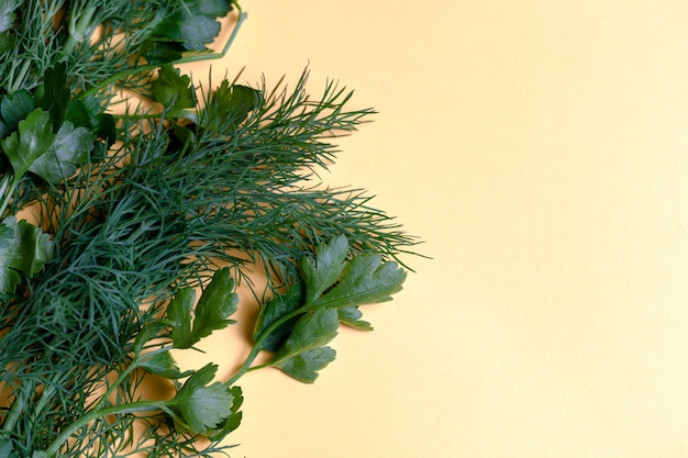 Fresh herbs dill, parsley at yellow paper background