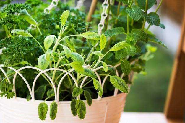 Fresh herbs in hanging outdoor basket