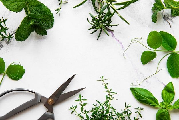 Fresh herbs on white marble background