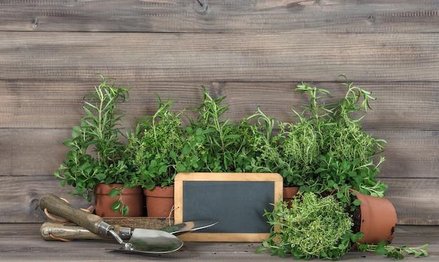 黒板と新鮮なハーブ。健康食品成分ローズマリー、タイム、オレガノ