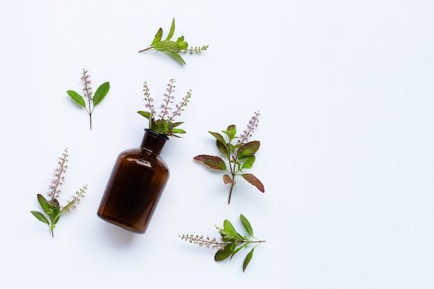 Свежие листья базилика и цветок с бутылкой эфирного масла на белом