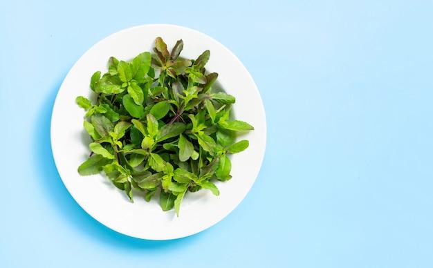 Fresh holy basil leaves in dish plate