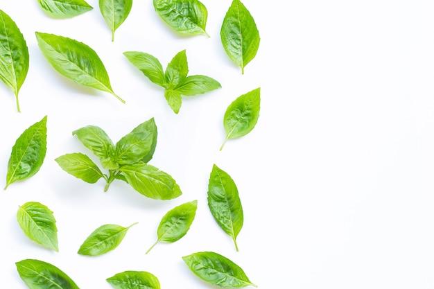 Fresh holy basil leaves on white