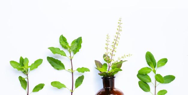 エッセンシャルオイルのボトルと新鮮な聖なるバジルの葉。