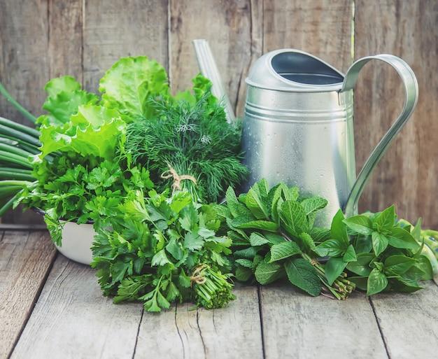 Свежая домашняя зелень из сада.