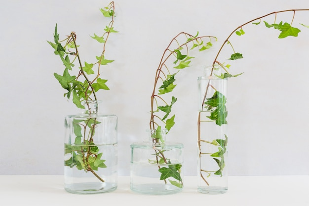 Fresh ivy twigs in the different type of glass vase on table