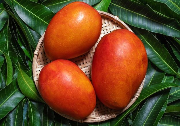 Fresh juicy beautiful mango fruit in bamboo sieve over green leaf background