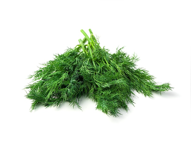 Fresh, juicy dill on a white background. side view, with space to copy.