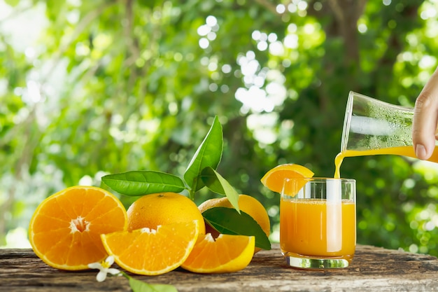 Fresh juicy orange fruit set over green nature