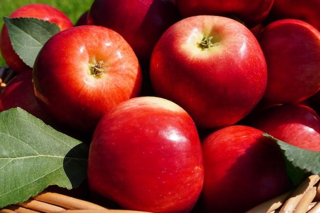 고리버들 바구니 근접 촬영에 신선한 육즙이 빨간 사과 거짓말