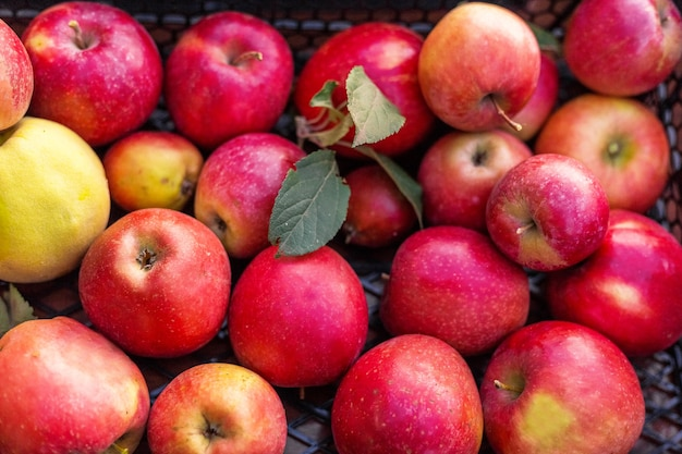 Свежие сочные красные яблоки, естественный фон. закройте яблок в коробке. урожай, витамины, вегетарианцы, фрукты, урожай