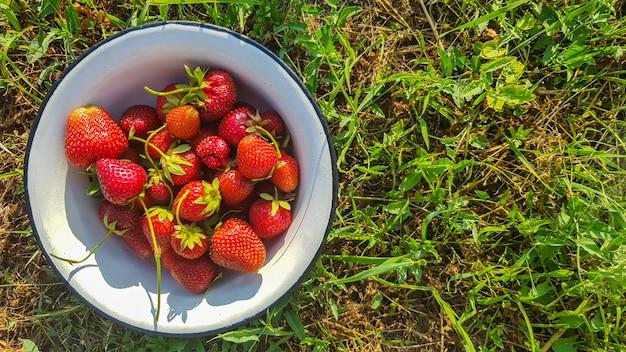 화창한 여름날 야외에서 오래된 금속 그릇에 신선하고 잘 익은 맛있는 유기농 딸기. 스트로베리 레드의 신선한 베리와 달콤한 달콤한 과일.
