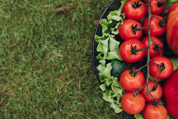 Fresh juicy tomatoes lettuce cucumber in bucket on green summer grass top view