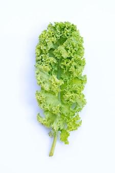 신선한 케일 잎 샐러드 야채