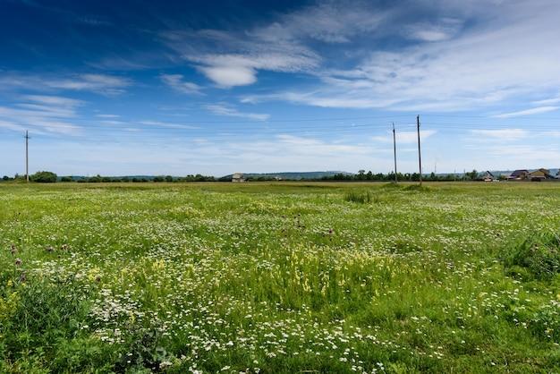 緑の野原で電気のケーブルと電柱のラインの新鮮な風景
