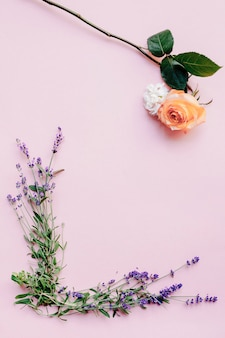 Fresh lavender flowers and rose on pink background