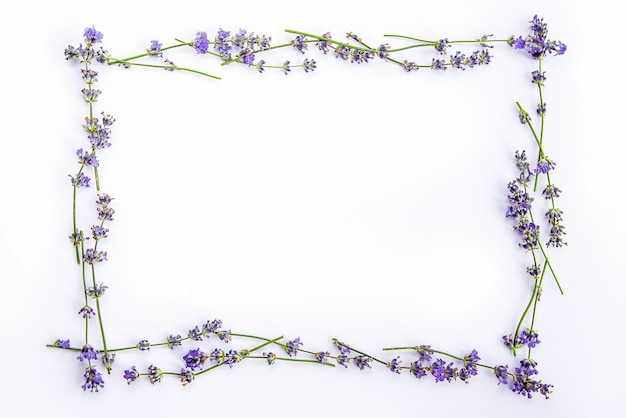 Fresh lavender flowers on a white background.