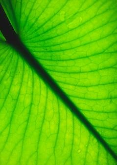 新鮮な葉のテクスチャーまたは葉の背景