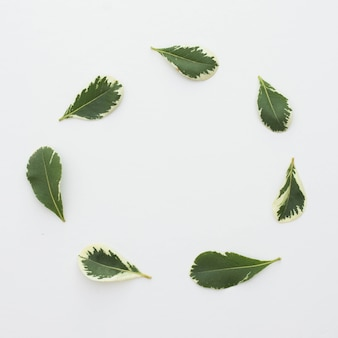 Fresh leaves arranged in circular frame over white surface