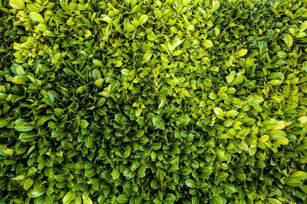 꽃에서 신선한 잎 배경 텍스처