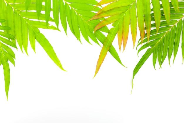 신선한 나뭇잎 프레임 흰색 배경에 고립