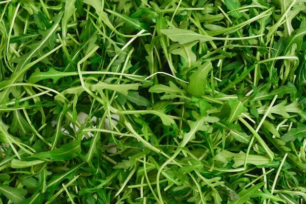 ルッコラの新鮮な葉