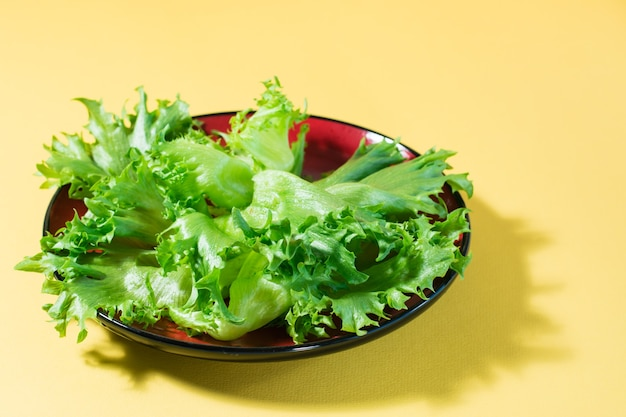 노란색 테이블에 접시에 프리즈 양상추의 신선한 잎.