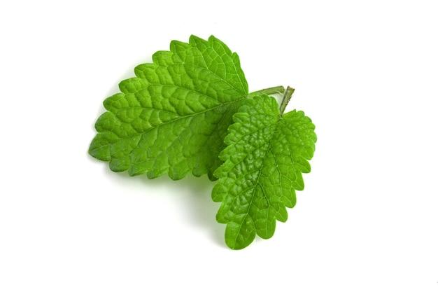 신선한 레몬 밤 잎 흰색 배경에 고립입니다.