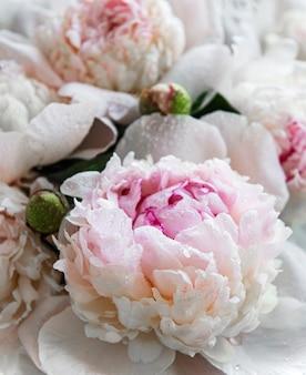 Свежие светло-розовые цветы пиона как натуральный стол