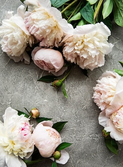 Fresh light pink peony flowers border with copy space on grey concrete  background, flat lay.