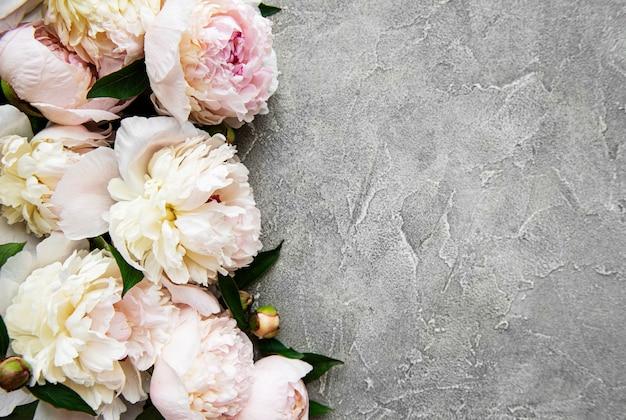 新鮮な淡いピンクの牡丹の花は、灰色のコンクリートの背景、フラットレイのコピースペースと国境を接します。