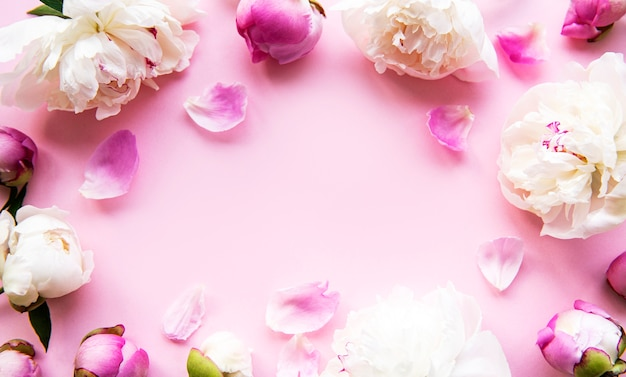 Fresh light pink peony flowers border with copy space on pink pastel   background, flat lay.