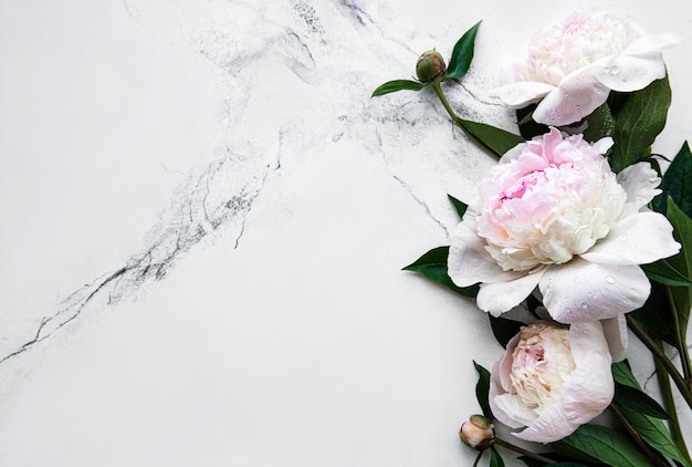 Fresh light pink peony flowers border with copy space on white marble  surface flat lay