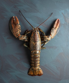 Свежий лобстер на художественной поверхности, концепция роскоши, гурман, качественные свежие морепродукты