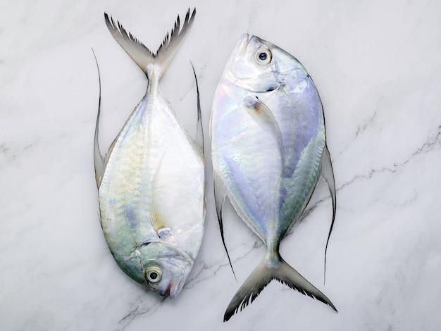 흰색 대리석 식탁 배경에 신선한 롱핀 트레발리 생선이 놓여 있습니다. 상위 뷰 및 복사 공간입니다.