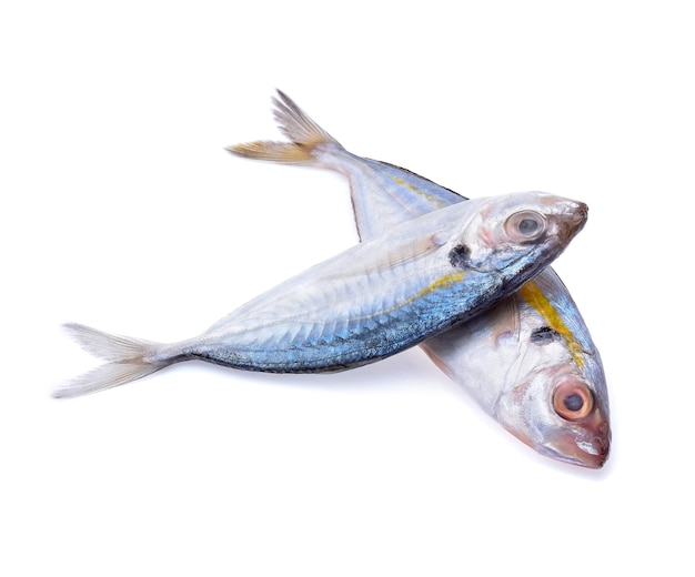 Fresh mackerel fish isolated on white background