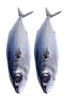 신선한 고등어 물고기 흰색 절연입니다.