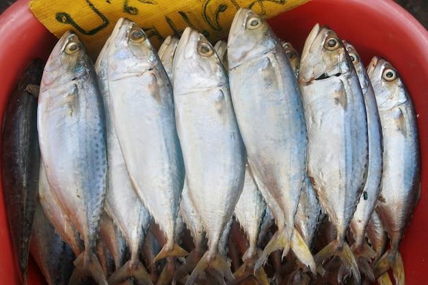 Fresh mackerel in market