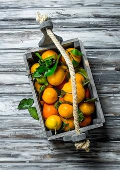 Свежие мандарины с листьями в коробке. на деревянном столе