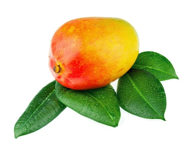 Свежие плоды манго с зелеными листьями, изолированные на белом фоне.