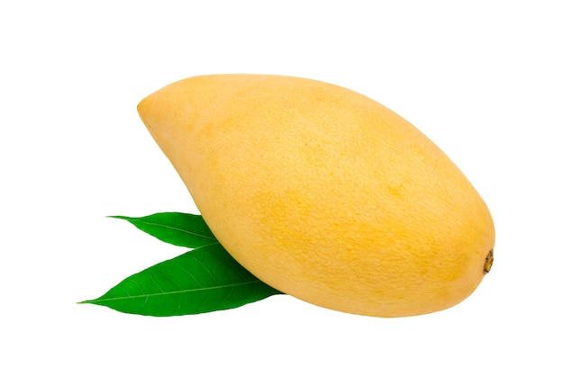 Fresh mango on white