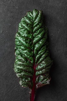 Fresh mangold salad leaf on black background.. plant texture. artistic shot. low key. top view
