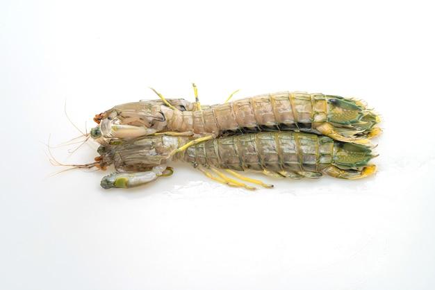 Fresh mantis shrimp isolated on white surface