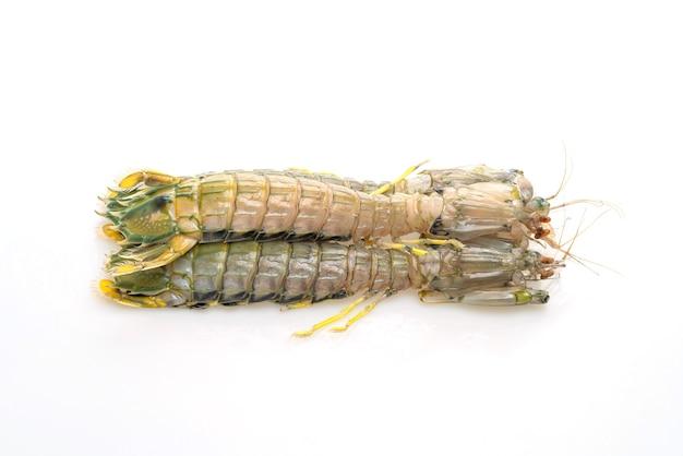 Свежие креветки богомола изолированные