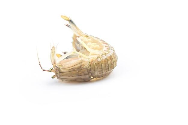 Свежие креветки богомола на белом фоне
