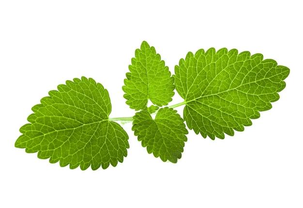 白い背景で隔離の新鮮なメリッサの葉