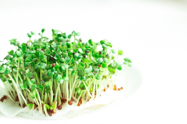 Свежий микро зелень крупным планом. microgreen ростки горчицы. микрогрин растет. концепция здорового питания.