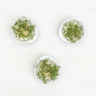 Fresh micro greens sprouts of arugula contains nutrients and vitamins
